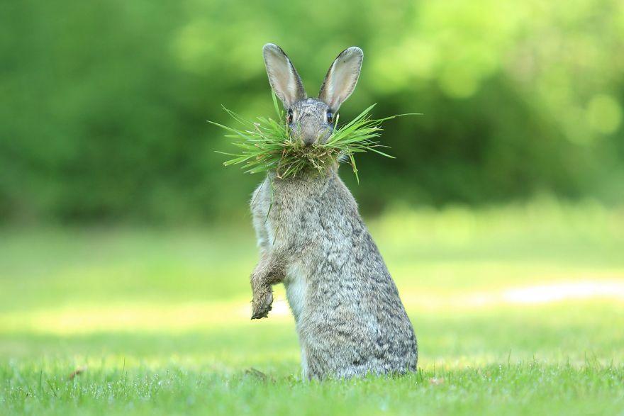 Забавный заяц