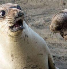 Эти забавные животные. Подборка смешных фото за январь.